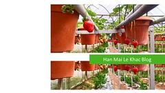 Cameron Highland (Han Mai Le Khac) Tags: highland cameron cameronhighland travel attractions nature flowers