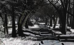 """Where I follow, you'll go"" (A Lone) Tags: second life secondlife sl virtual dark light shadow art firestorm gimp photography windlight photo sim 3d nature landscape scenery beauty romance serene"