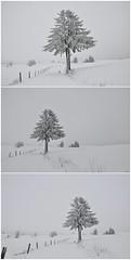 Der Winter hat Einzug gehalten... (Uli He - Fotofee) Tags: ulrike ulrikehe ulihe uli ulrikehergert hergert schnee winter rhön februar baum wasserkuppe eube wanderweg winterwanderweg