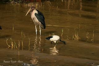 Lago Langano - Etiopia