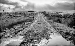 Teesdale . (wayman2011) Tags: f2 fujifilmxf23mm lightroomfujifilmxt10 wayman2011 bwlandscapes mono rural countryside tracks puddles pennines dales teesdale mickleton countydurham uk