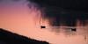 W zachodzącym słońcu (arjuna_zbycho) Tags: sonnenuntergang sunsetting zachódsłońca temporisation tramontosu naplemente закатна wolken clouds chmury himmel sky niebo theendoftheday badenbeiwien ptakiwodne ptaki vogel birds