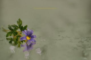 Violette et reflet