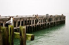 Golden Gate. Pier (AKSHLWD) Tags: leica elmar fuji