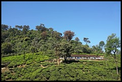 Tea Estate Quarters (Indianature st2i) Tags: parryagroestate valparai anamalais anamallais anamalaitigerreserve westernghats tea shola rainforest nature indianature 2018 january february tamilnadu india life wildlife plantation forest people estate