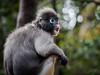 Oh my... (davYd&s4rah) Tags: stunned depthoffield dof monkey olympusm75mmf18 emotion bokeh light southafrica