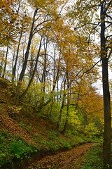 Within the linden gorge (МирославСтаменов) Tags: russia kaluga tarusa ravine slope linden fall autumn forest