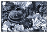 Flowers in Mono (Timothy Valentine) Tags: 0118 blackandwhite tomarket silverefex 2018 flowers whitman massachusetts unitedstates us 52weeks