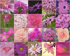 My flowers in pink ✿ (Carolita✿) Tags: prettyinpink crazytuesdaytheme 7dwf