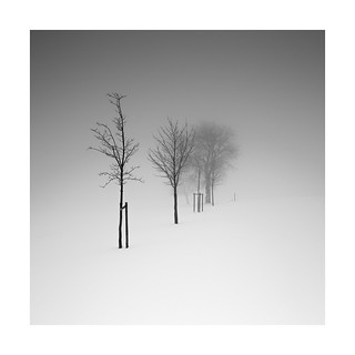 The silence of the trees Iii