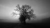 Allee im Nebel - Fog avenue (greenoid) Tags: fog nebel allee avenue parkway alley strase sw bw schwarz weis gegenlicht sonne sun baum tree bäume trees winter