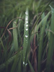 (thombe77) Tags: gras grass leica dlux water drops wassertropfen herbst autumn fall