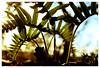 Fern (AnaïsRIBAUD) Tags: fern natural fougères nature wild vaucluse