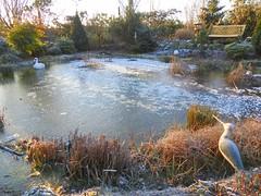Morgensonne und -7 Grad (Sophia-Fatima) Tags: pond gartenteich wassergarten mygarden meingarten naturgarten gardening morgensonne eis