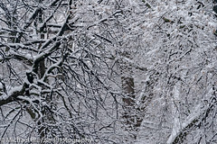 Snow Art (mbfirefly) Tags: snow ukraine kyiv shevchenkopark