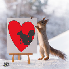 red squirrel with painting with a  heart (Geert Weggen) Tags: red nature animal squirrel rodent mammal cute look closeup stand funny bright sun heart love valentine holiday tender logo winter snow passion book background flirt care gentle charm painting pencil art geertweggen bispgården jämtland sweden geertweggenhardekozweden ragunda
