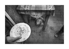 Chees (Jan Dobrovsky) Tags: carpathians leicaq market winter chees street people reallife outdoor plate hand countryside monochrome car dog blackandwhite sheepcheese table ukraine countrylife document