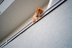 Flexible (Marian Gasparik) Tags: street flat balcony cat orange animal flexible fuji fujifilm xpro1 50mm meike f2 bratislava petržalka windows city slovakia february 2018 winter pet gymnastic climbing gray white