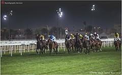 IMG_7171 copy (Services 33159455) Tags: qatar doha horse racing qrec emir horseracing raytohgraphy