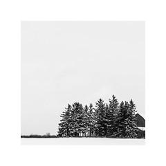 (schan-photography.com) Tags: canoneos6d zeissmilvus1450mm milvus1450 landscape blackandwhite monochrome bw zeiss milvus 50mm f14 trees barn winter snow square