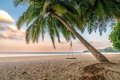 Lonely Palm (CHCaptures) Tags: haidaaustria haidafilters landschaft palm polfilter sommer surinbeach thailand a7ii beach dusk ilce7ii morning sand sel2470z sony sunrise travel variotessartfe42470 tambonchoengthale changwatphuket th