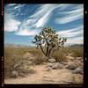 Mojave Desert (jfrancistoolco) Tags: mojave desert joshua tree portra kodak rolleiflex 28e 6x6cm 160vc landscape sky california 160 portra160 filmfilmforever 80mmzeissplanar