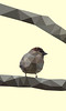Sparrow (fiona nicole c) Tags: low poly graphic design art animal photoshop