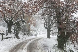 Negua-Invierno