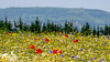 Countryside Wildflower Meadow (SLHPhotography1990) Tags: spring wild flower meadow isle wight british english nature natural colour burst vivid season country countryside rural landscape beauty scene scenic walk many lots native flowers stack stacked