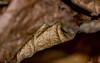 #Monochrome - Shades of Brown (Aleem Yousaf) Tags: macromondays nikon d800 nikkor105mm bokeh macro closeup shallow depth field mnochrome shades garden brown texture leaves burnt dried