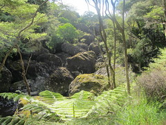 Walking  among ancient boulders, Wairere, Hokianga. NZ. (d.kevan) Tags: newzealand waikere northland boulders rocks lichens moss grass plants trees paths valleys ferns hokianga