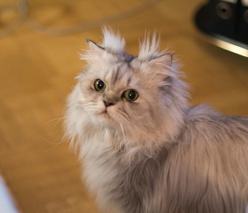 Cat ©  Andrey