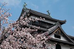 Matsue (David Hédin) Tags: 2012 matsue chateau chugoku chã¢teau japon