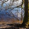 Waters edge (Keith Gooderham) Tags: kg180220711sqweb1 copyrightgreenshootsphotography scotland luss lochlomond winter tree branches reflections