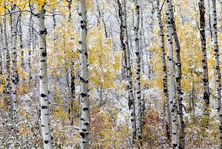 Detalles de un bosque nevado