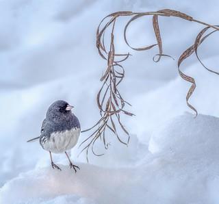 Another Little Bird...