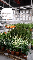 Live plants! (spelio) Tags: ikea testing new camera a6000 sony jan 2018 shopping shoppingnotbuying justlooking sets lighting available decoration design