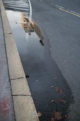 Pavements of Ljubljana (Denkrahm) Tags: slovenia ljubljana puddle reflection street