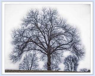 high school tree