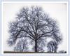 high school tree (jsleighton) Tags: high school newburgh ny tree winter landscape