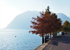 Monte Isola (nschouterden) Tags: italy northernitaly monteisola