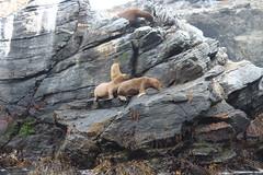 Reserva nacional Pingüino de Humboldt (karlita y Chelito) Tags: punta de choro