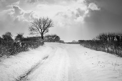 Chilly Lily Lane (stuartiainbond) Tags: rural farmland england broads norfolk white winter waveney fuji xt1 stuart bond uk aldeby snow sky tree field landscape trees blizzard snowing storm cold freezing chilly lane country clouds hedges track