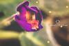 Pequeno Grande Mundo (DeBonito) Tags: canon t5i 700d montagem fantasia fantasy flor flower magia magic photoshop