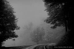 Foggy Mountain Road (Grace Pedulla Dillon) Tags: scenic blueridgemountains landscape fog mist road curvecold tree trees