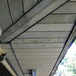 Roof Lines thumbnail