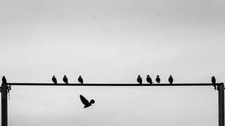 delicate balance  / taking side ...