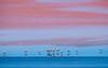 Flamingo Melody (Rainer ❏) Tags: jamesflamingos flamingo flamenco lagunacolorada see lake gebirge landschaft mountains landscape hochebenesüdboliviens bolivia bolivien latinamerica southamerica color rainer❏