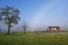 Arc de brouillard (Croc'odile67) Tags: nikon d3300 sigma contemporary 18200dcoshsmc paysage landscape brouillard fog arbres trees ciel sky grouptripod