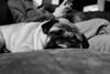_DSF1526.jpg (zane.hollingsworth) Tags: 130ss pug belle 23mm pugs f4 23mm35eqv iso12800